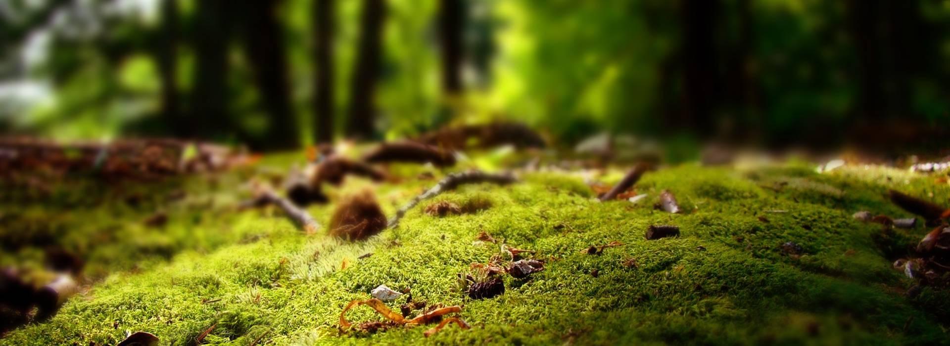 生态益生菌