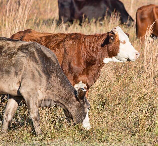 微生物在禽畜饲养的应用