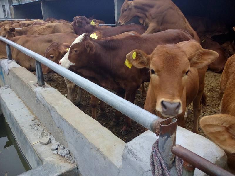生態益生菌禽畜應用